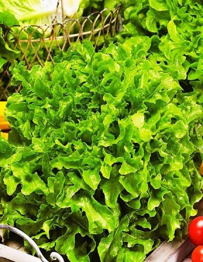Салат Изумрудный (УД) 0,3 гр цв.п