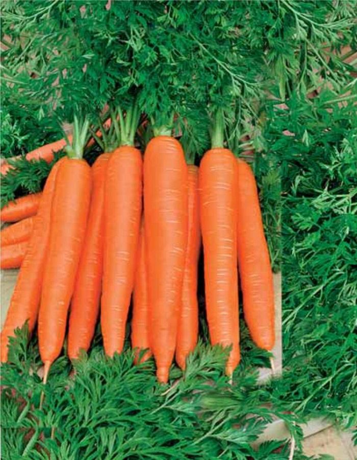 Морковь Осенний король  2 гр б.п.