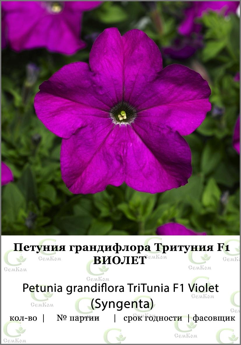 Петуния грандифлора Тритуния Виолет 100др (SG)  СЕМКОМ ПРОФИ