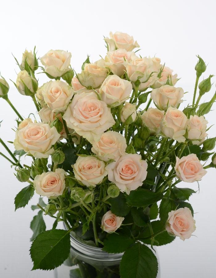 Роза спрей Яна 1 шт ОКС