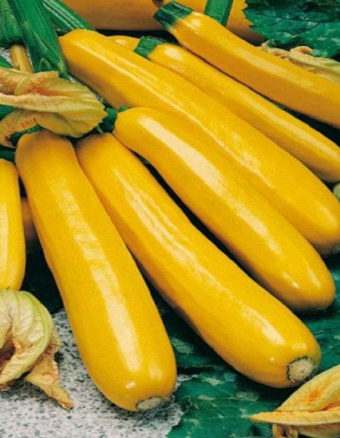 Кабачок Золотинка-цукини (УД) 10 шт цв.п