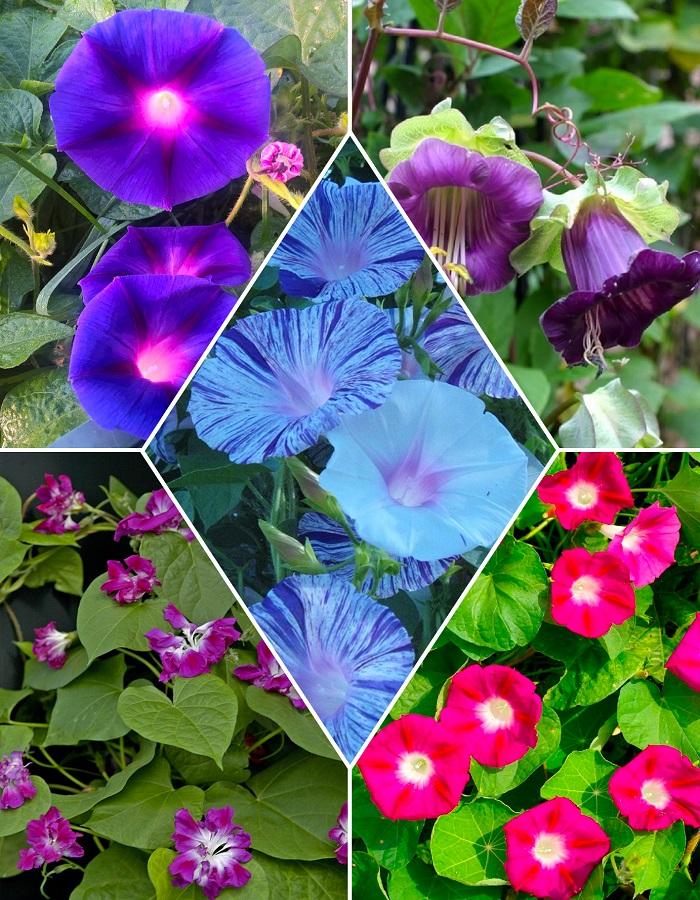 """Набор цветочная смесь  """"Вьющиеся растения"""""""
