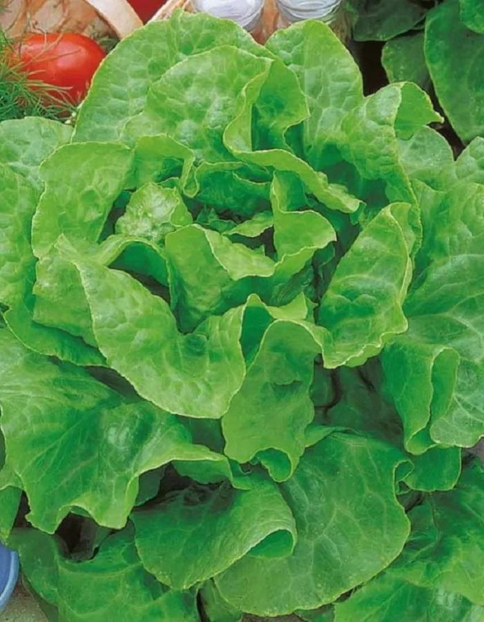 Салат Ларанд (УД) 0,25 гр цв.п
