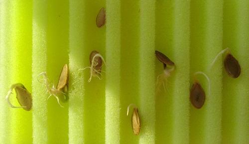 "Матрасик для семян ""Лабиринт"" малый 10х15 см (2 шт)"