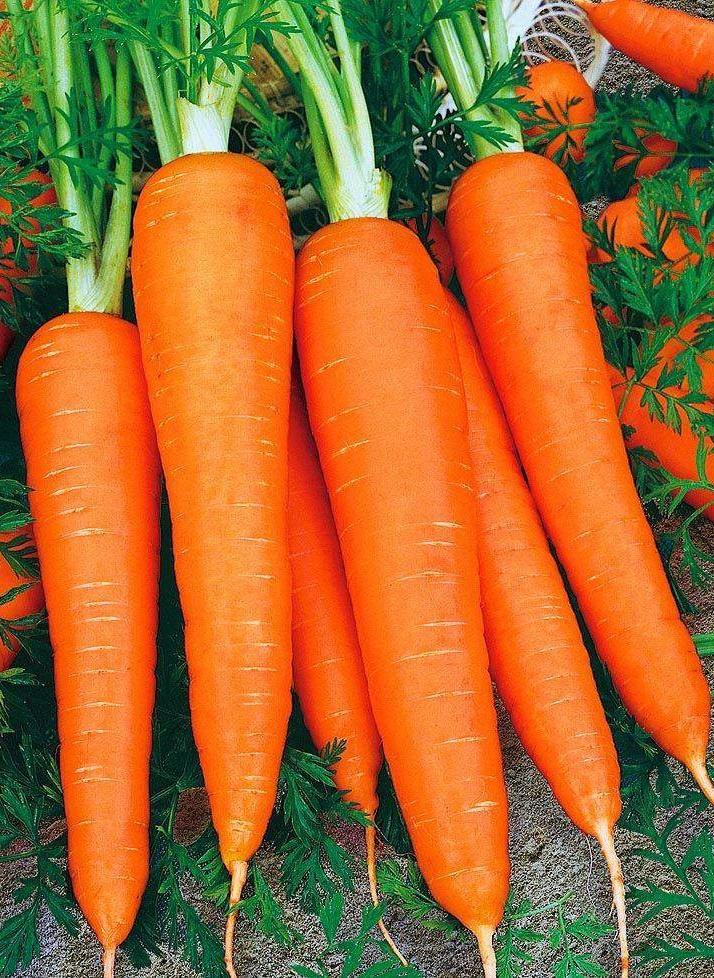 Морковь Карамелька красная (УД) 2 гр цв.п.