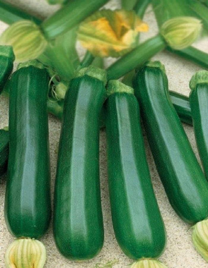 Кабачок Казерта-цукини (УД) 10 шт цв.п