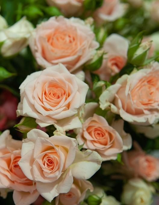 Роза спрей Крем Грация 1 шт. ОКС
