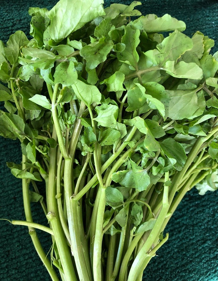 Микрозелень Капуста брокколи Линда - 5 гр цв.п.