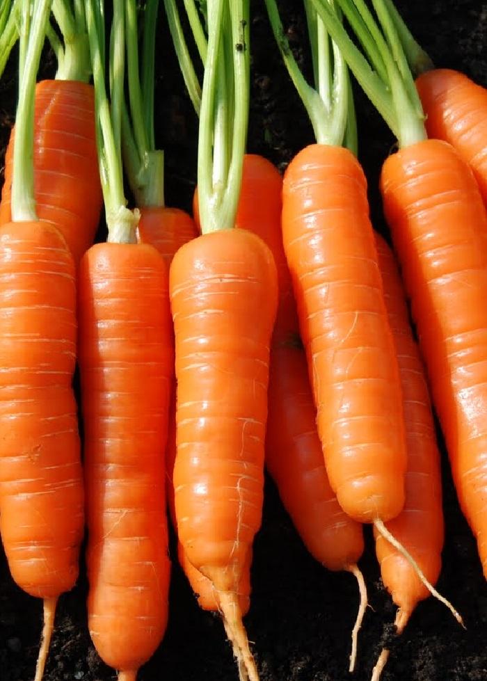 Морковь Каллисто F1 (УД) 1гр цв.п.