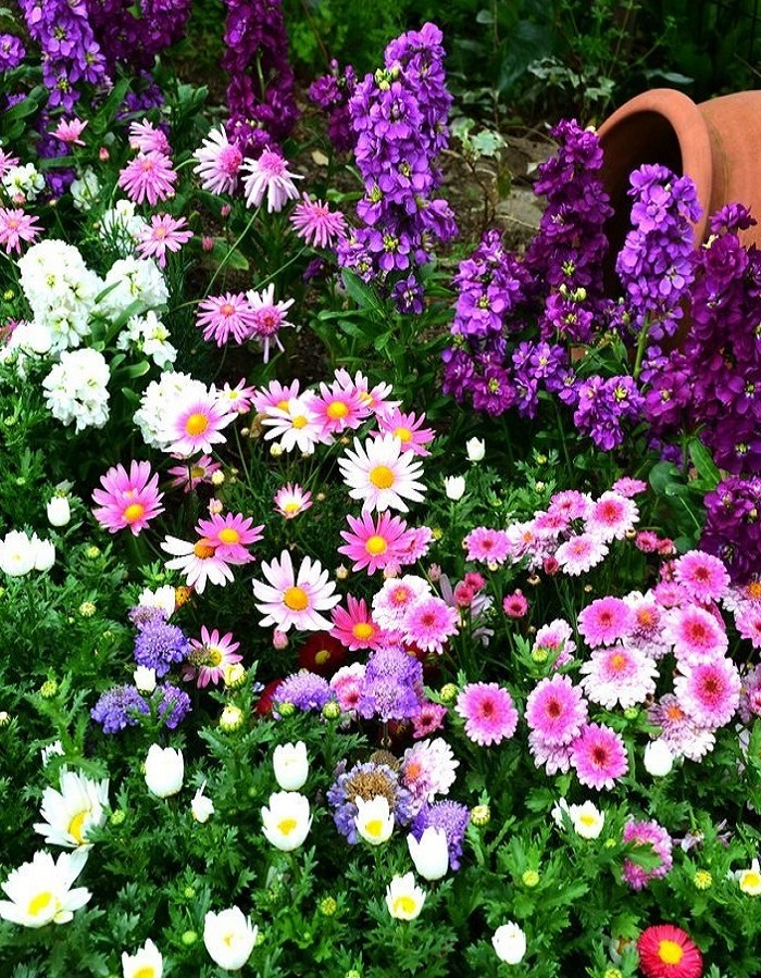 Смесь цветов для бабочек цв/п  1гр