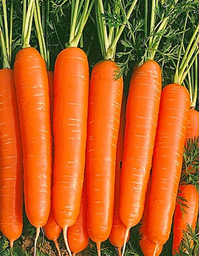 Морковь Ярославна  2 гр б.п.