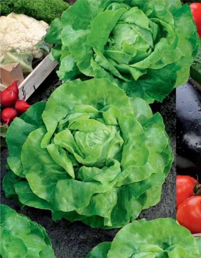 Салат Король рынка (УД) 0,25 гр цв.п