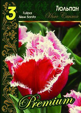 Тюльпан Нью Санта 1 уп. (3шт.) фракция 12+