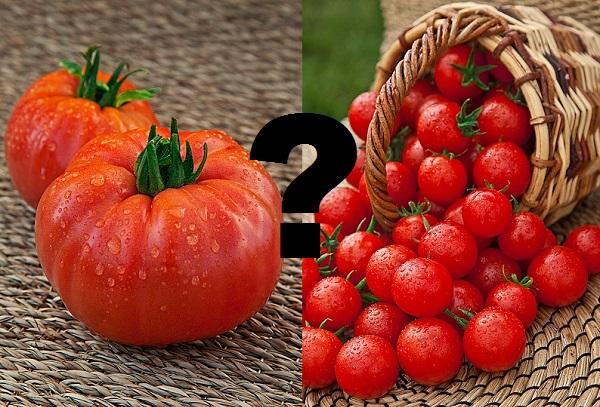 https://agrosemfond.ru/upload/iblock/64b/tomat-dlya-vnuchat-f1-0-03-gr-tsv-p.jpg