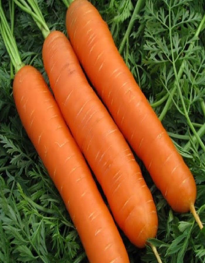 Морковь Вкусняшка  2 гр цв.п