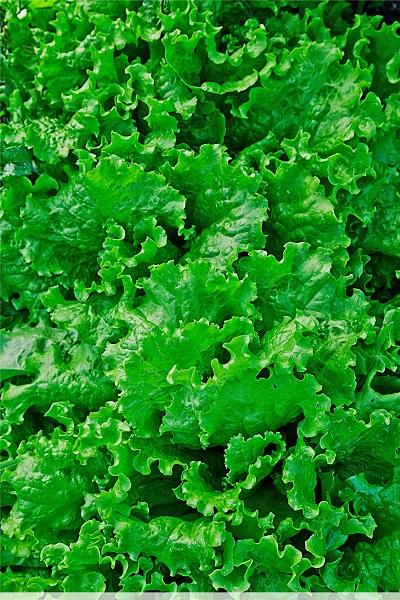 Салат Витаминный 1 гр б.п