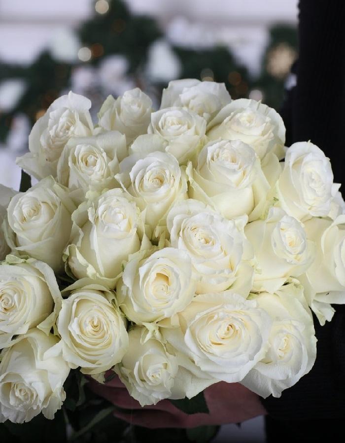 Роза чайно-гибридная Прауд 1 шт ЗКС