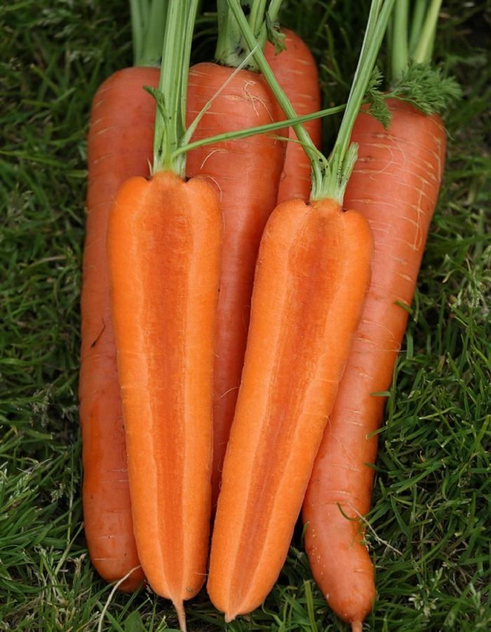 Морковь Аурантина F1 (Vita Green) 0,5г цв.п.