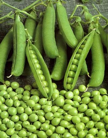Горох Альфа 2 овощной 10 гр  б.п.