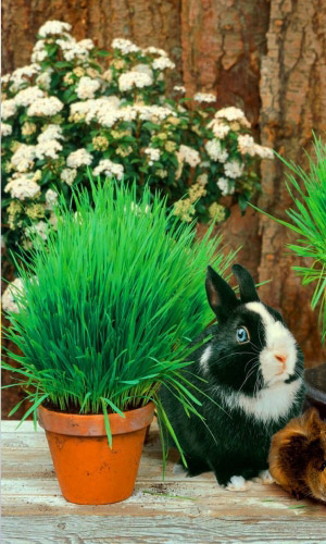 Трава для Домашних грызунов (УД) 10 гр