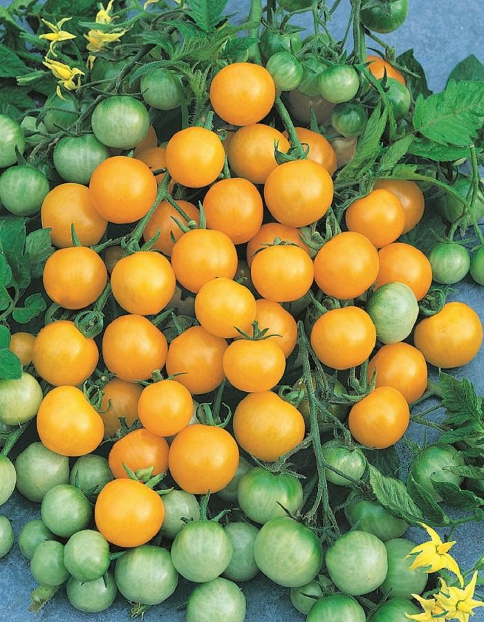 Томат Тимоша 0,05 гр цв.п