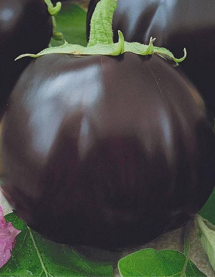 Баклажан Лаура (УД) 20 шт цв.п.
