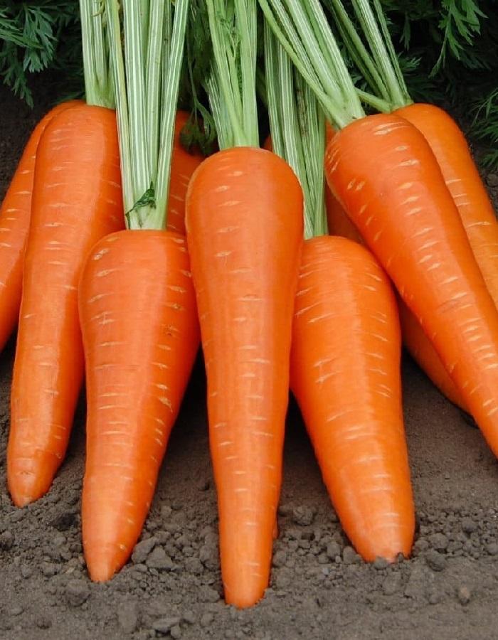 Морковь Абако F1 (Vita Green) 0,5г цв.п.