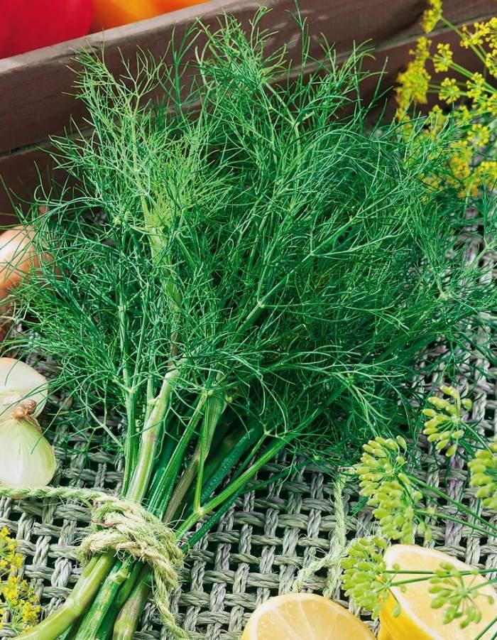 Укроп Голдкрон (Vita Green) 2 гр цв.п