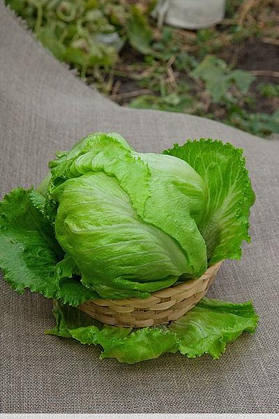 Салат Колобок 0,5 гр цв.п
