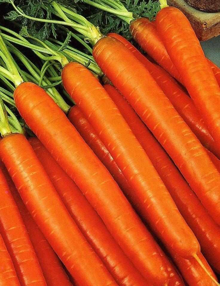 Морковь Колорит F1 (УД) 1,5 гр цв.п.
