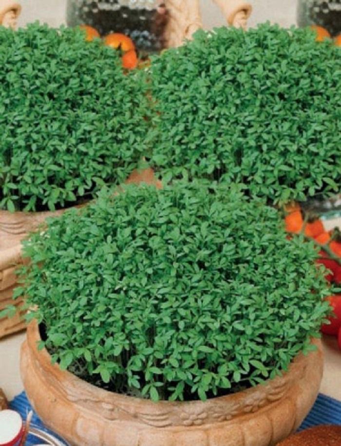 Кресс-салат Престиж (УД) 0,8гр. цв.п.