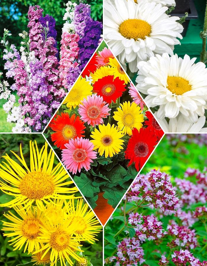 """Набор """"Многолетние цветы2"""""""