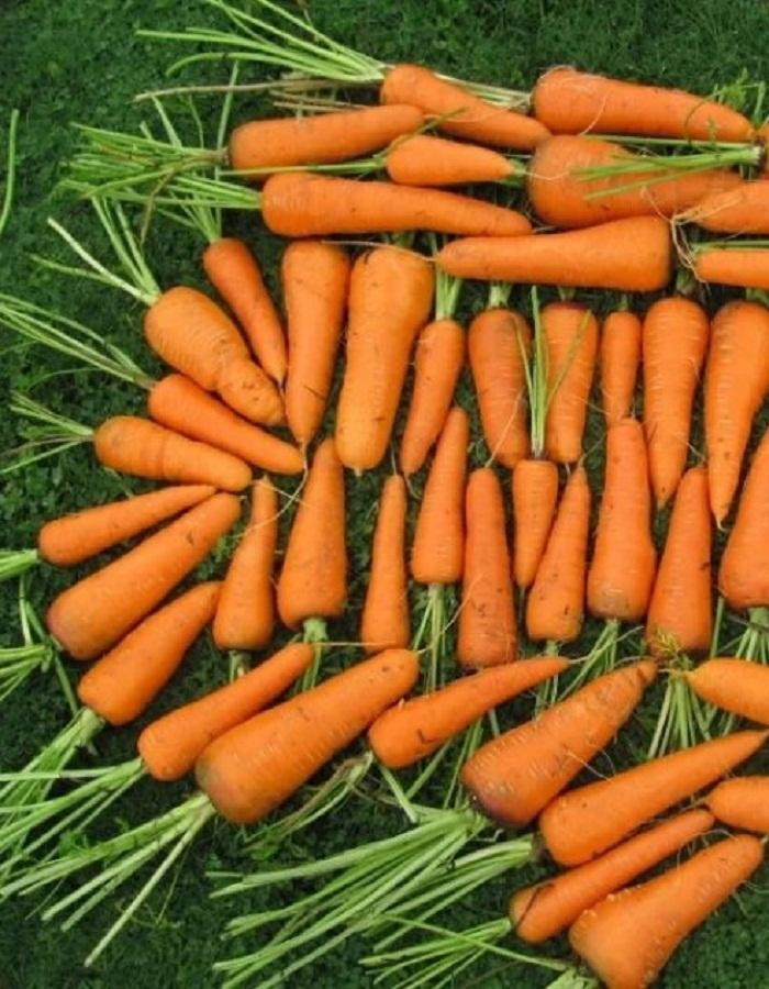 Морковь Каскад F1 0,5 г цв.п.