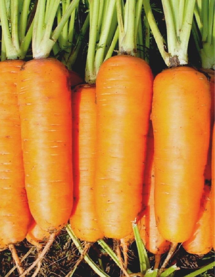 Морковь Абако F1 (Seminis) СемКом 0,5г цв.п.
