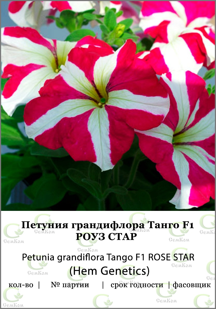 Петуния грандифлора Танго Роуз Стар 50др (HG) СЕМКОМ ПРОФИ фото