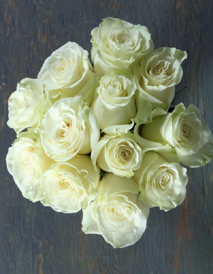 Роза чайно-гибридная срезка Мондиаль 1 шт ЗКС