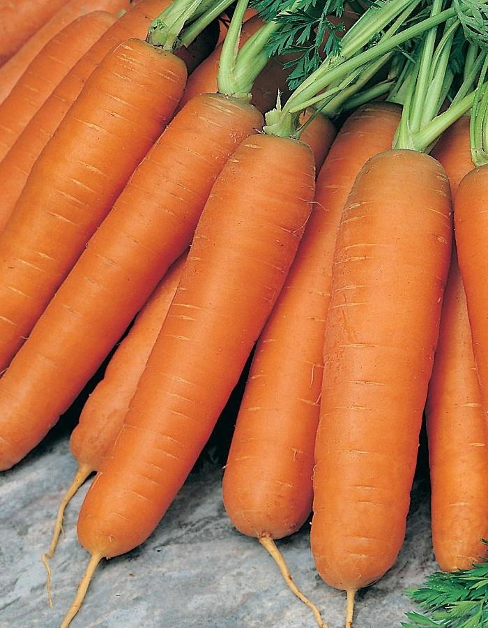 Морковь Балтимор F1 0,3 гр цв.п.