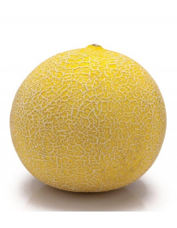 Дыня Апельсинка (УД) 10 шт, цв.п.