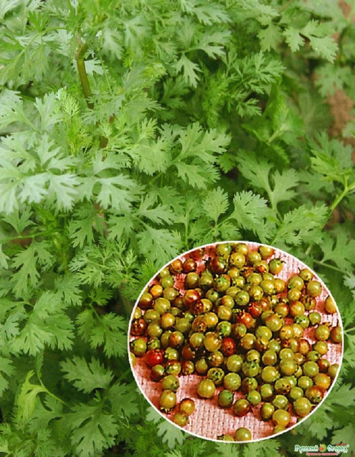Кориандр (кинза) Янтарь овощной 2гр ц.п